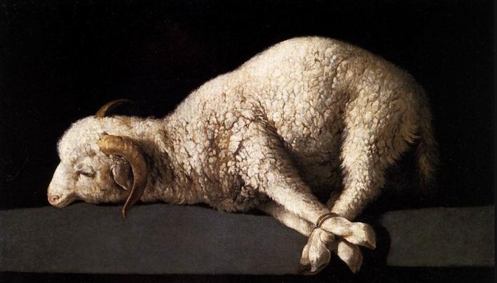 Агнец божий. Франсиско де Сурбаран, 1636-1640