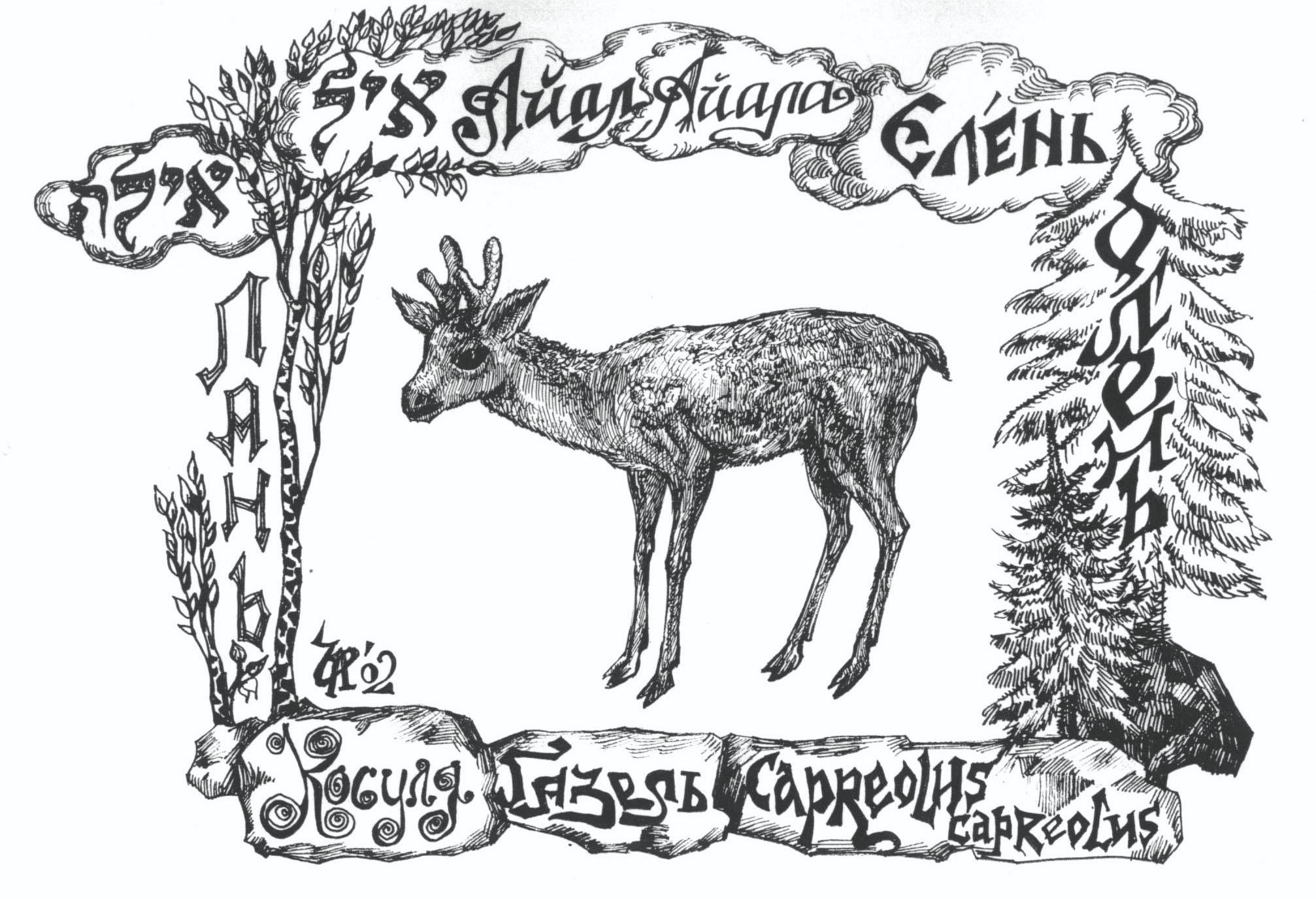 איל–'айал-косуля европейская. Рисунок Иры Голуб