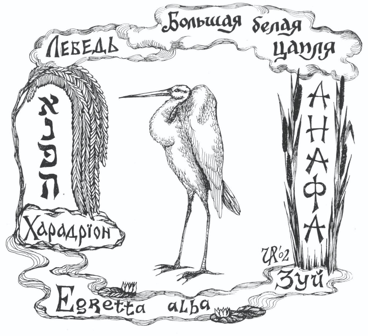 Анафа - цапля. Рис. Иры Голуб