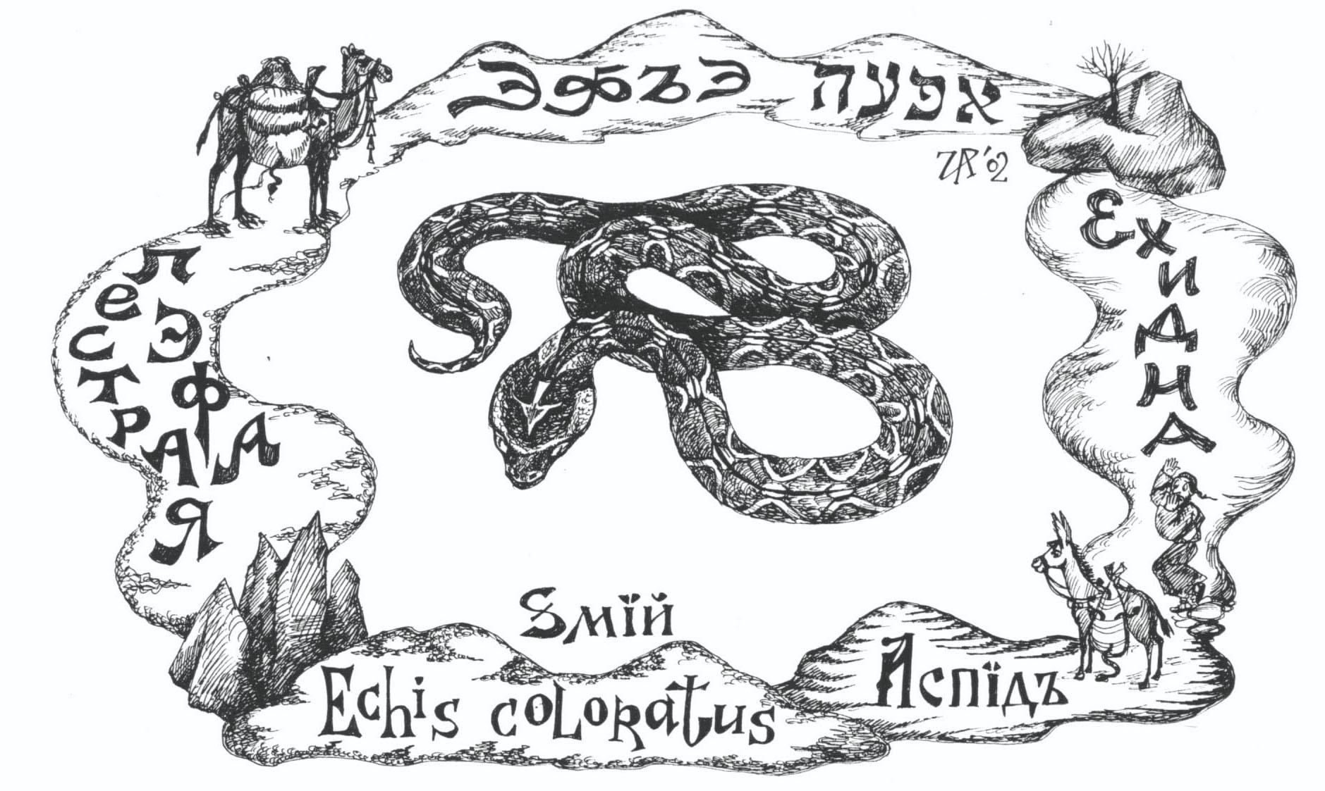 Эфъэ - ядовитая змея (пестрая эфа). Рис. Иры Голуб