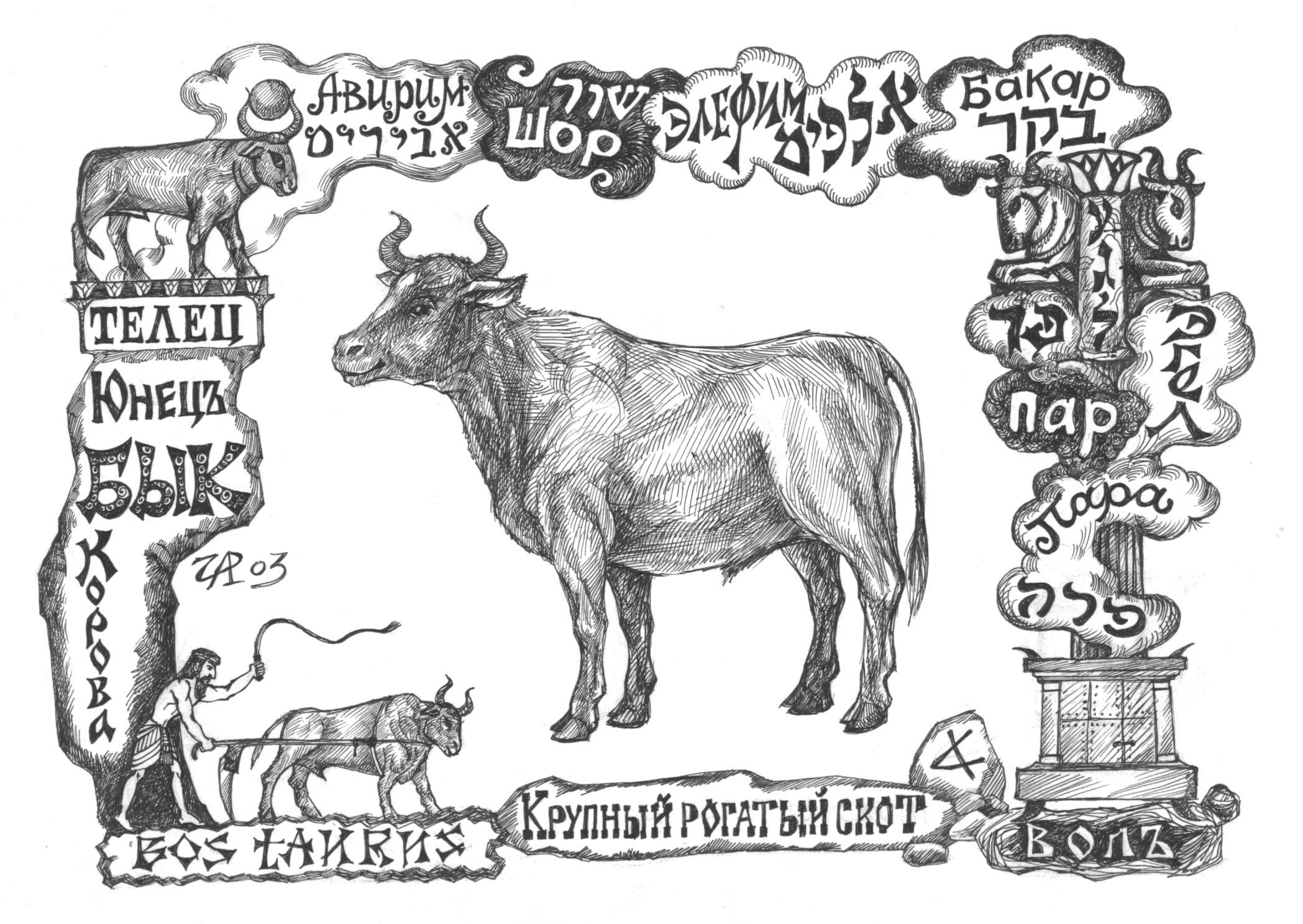 Бакар - крупный рогатый скот. Рис. Иры Голуб