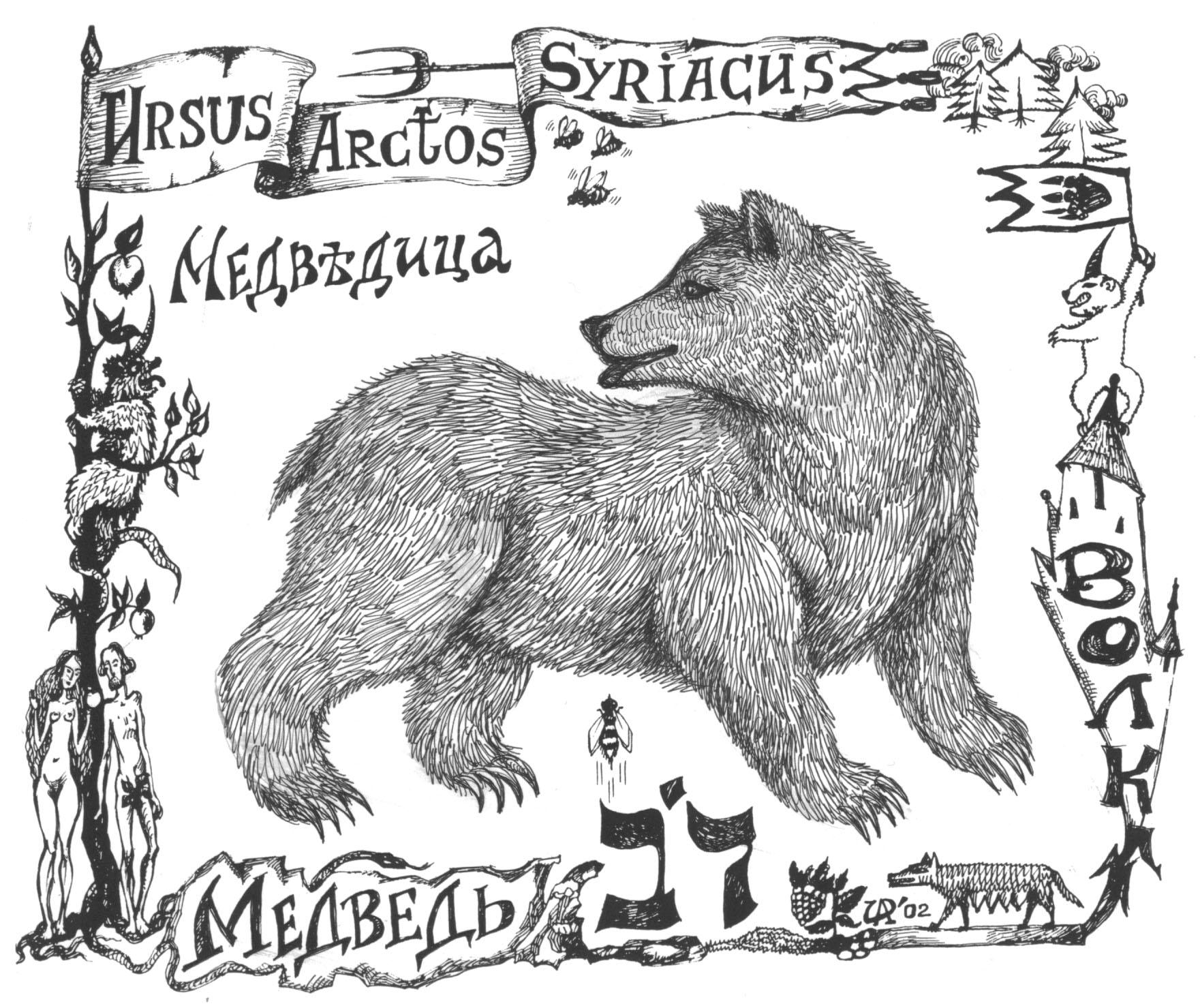 Дов-медведь. Рис. Иры Голуб