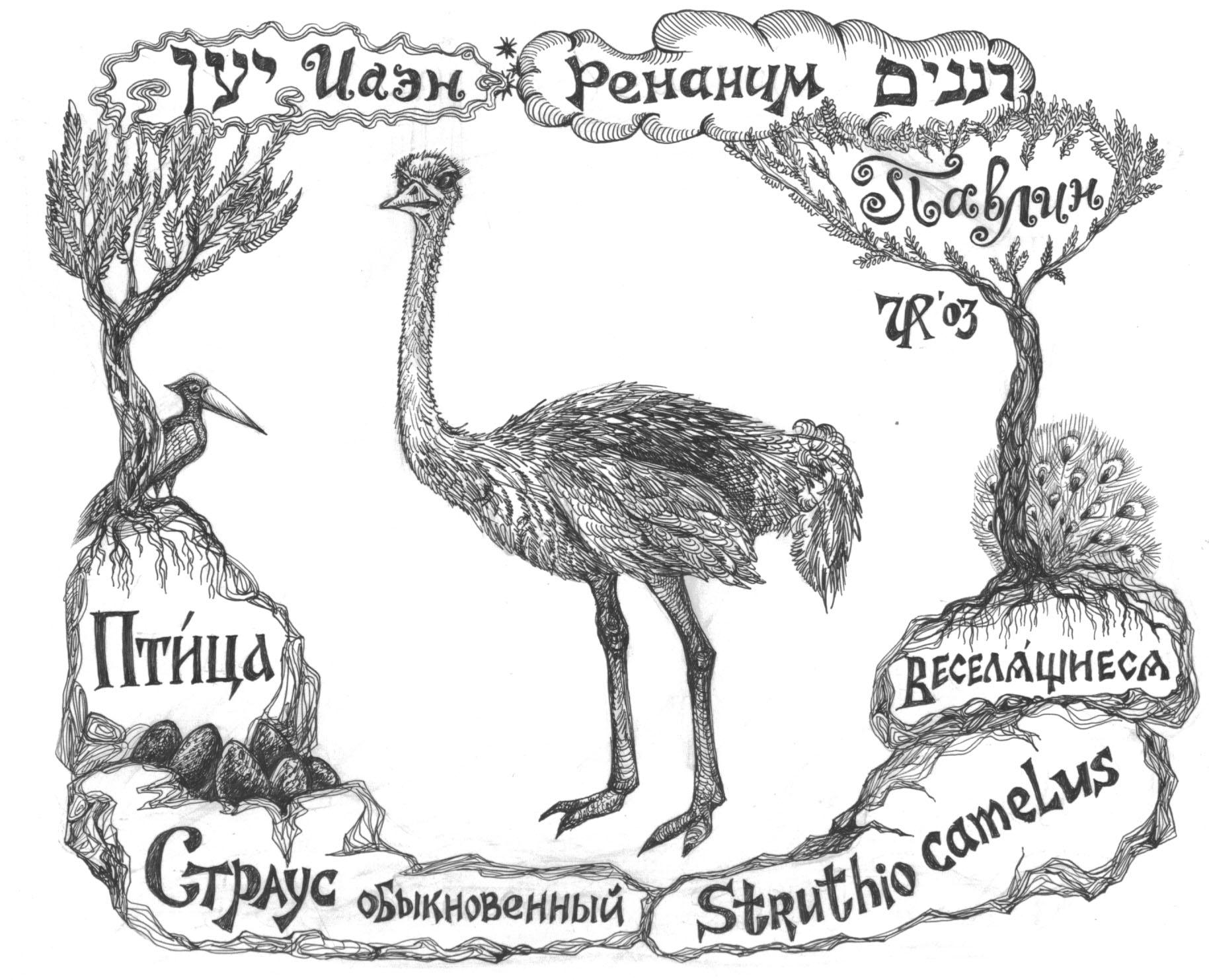 Йаэн-страус. Рис. Иры Голуб