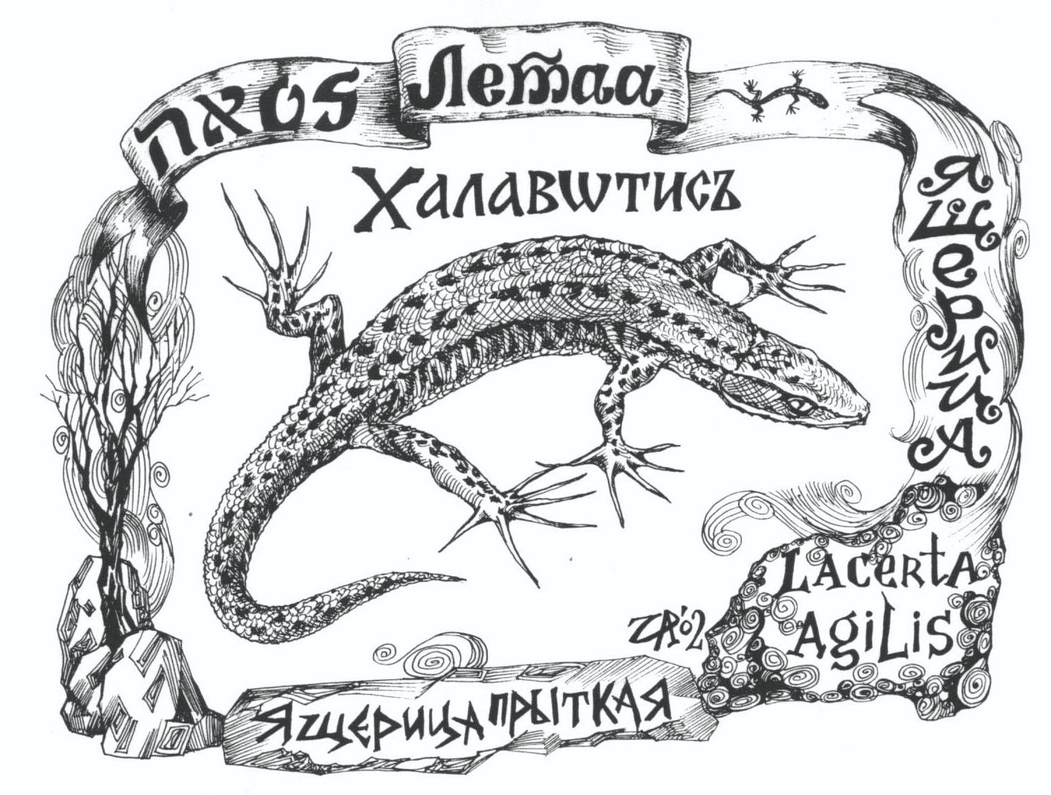Летаа - ливанская ящерица
