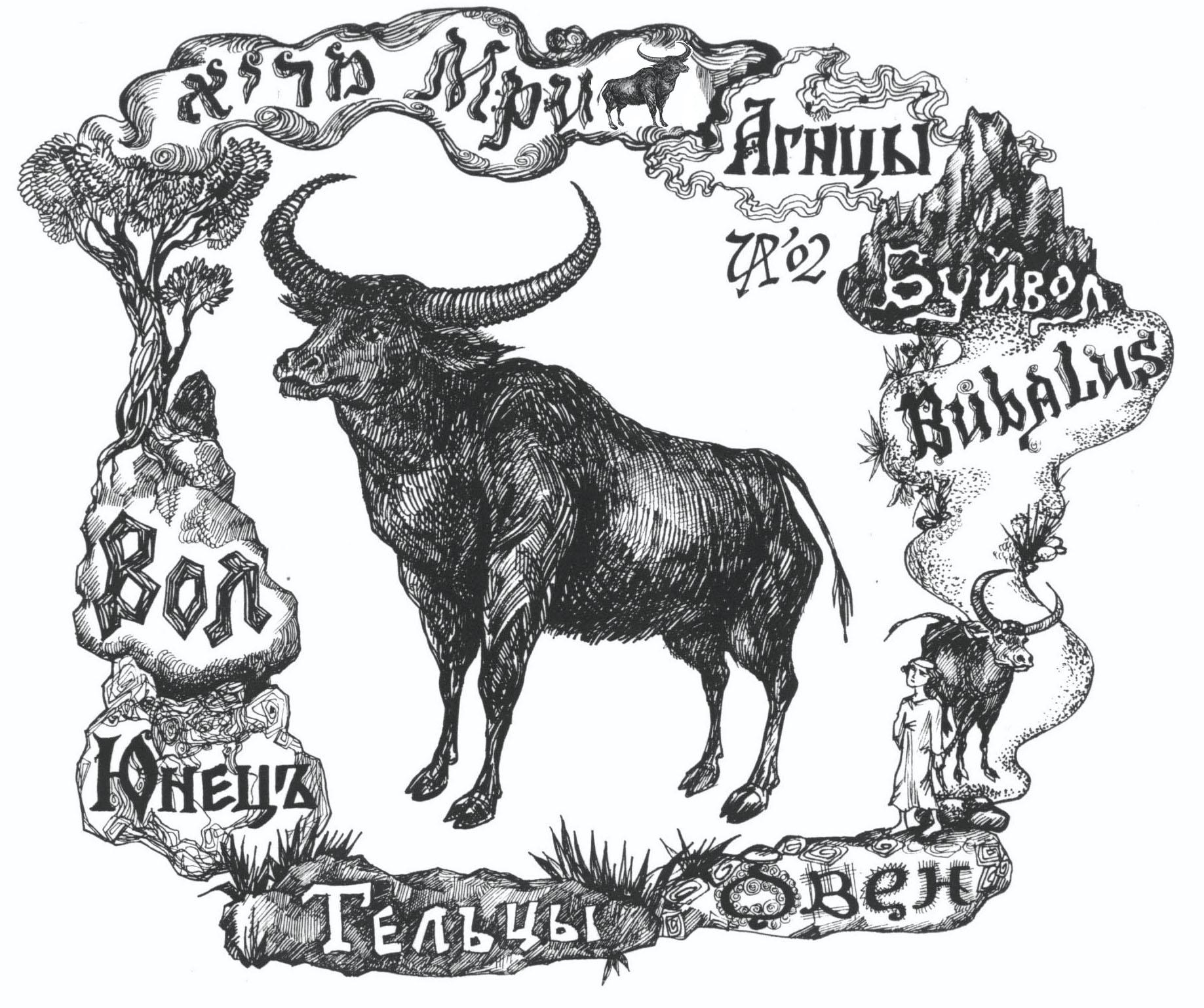 Мри - буйвол. Рис. Иры Голуб