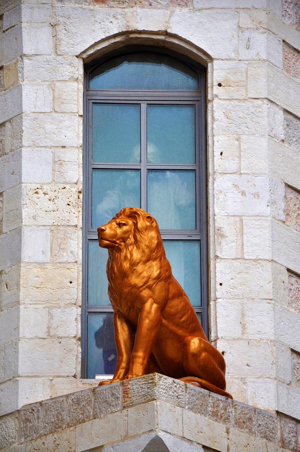 gali-dana singer-lions (36)