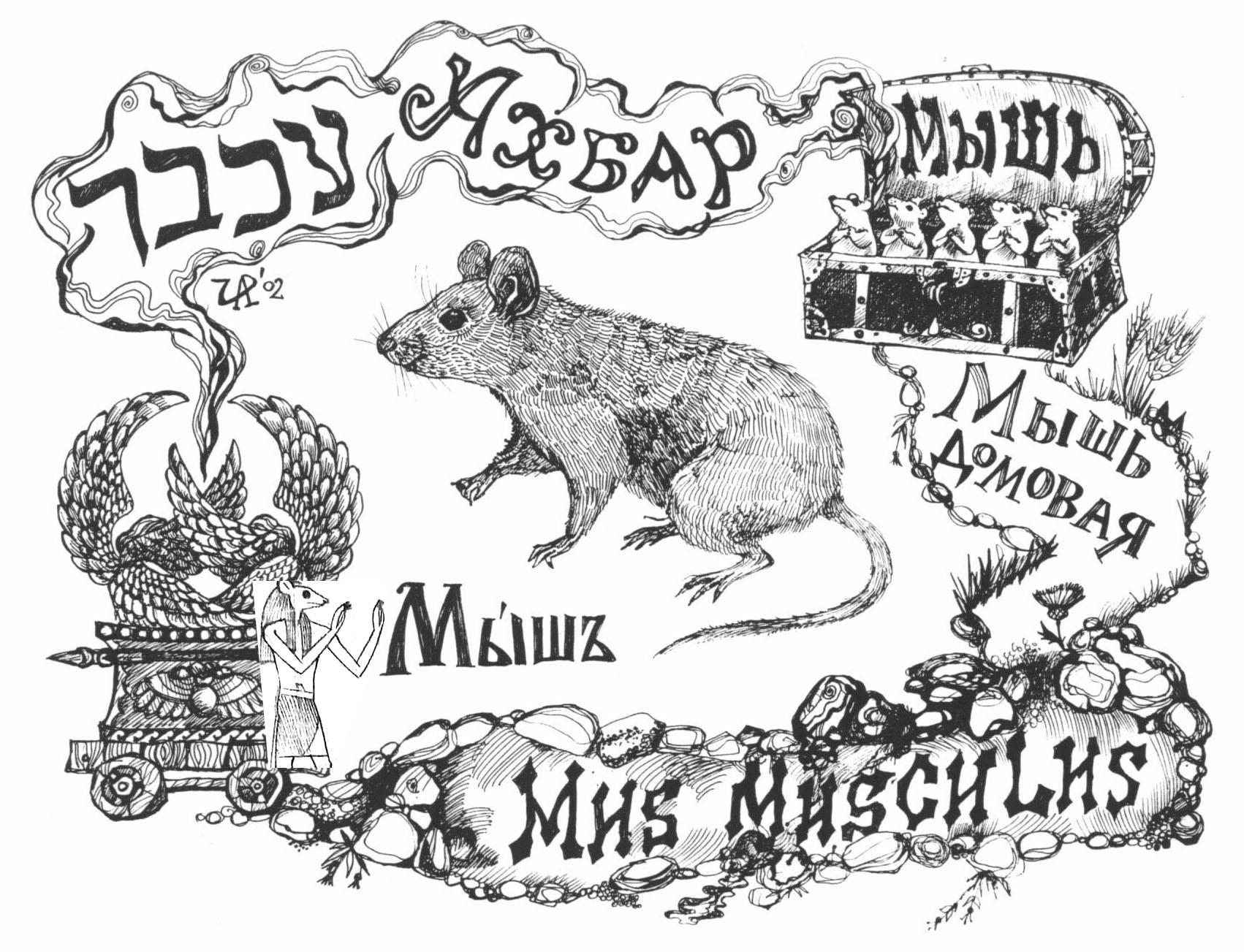 Ахбар-мышь. Рис. Иры Голуб