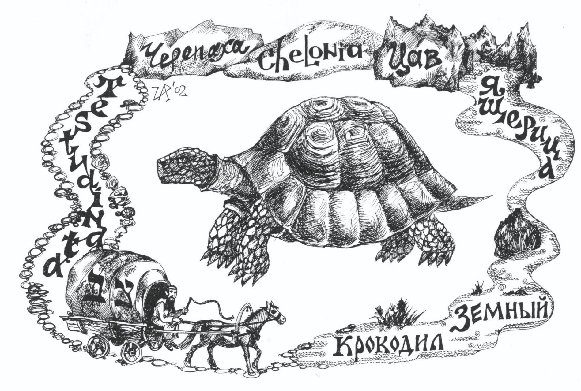 Цав- черепаха. Рис. Иры Голуб