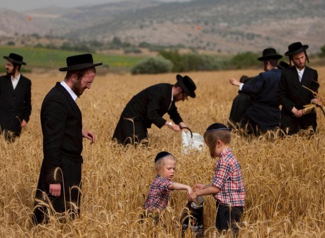 Подготовка к празднику Шавуот в Израиле
