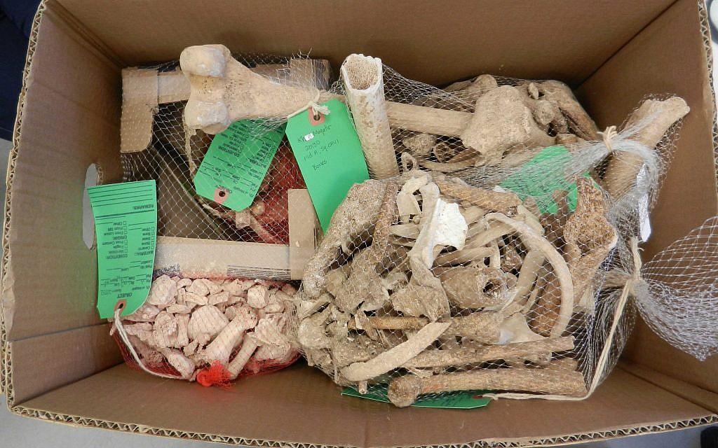 Кости, найденные в Хирбет-эль-Макатире в 2013 году (Фото: Стивен Радд)