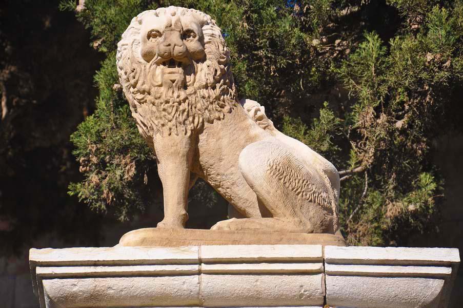 gali-dana singer-lions (13)