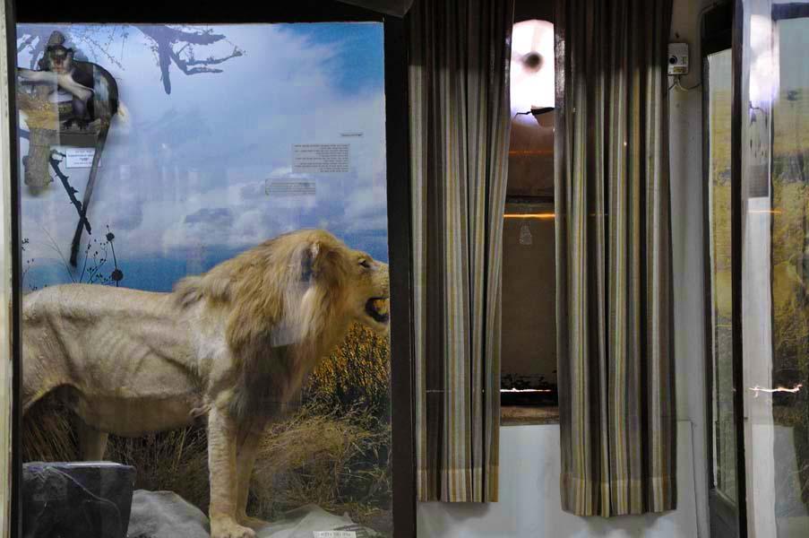 gali-dana singer-lions (14)